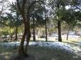 【鸡年游记】景山公园残雪2