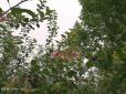 【邻友随手拍】任性的海棠花,想什么时候开就什么时候开