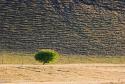 寻找一棵树