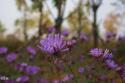 【爱上秋天】湿地栈道看水之潋滟,色彩斑斓赏秋之容颜