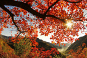 喜迎祖国七十华诞,来坡峰岭万亩红叶发现醉美中国红