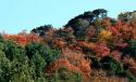 【遇见最美风景】香山的深秋一派姹紫嫣红