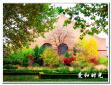 【爱和时光】清华园之秋