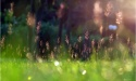 #飞花令#线上诗词大会第九期,五月草木繁茂,郁郁葱葱,本期主题:草