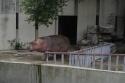 2001年7月11日动物园