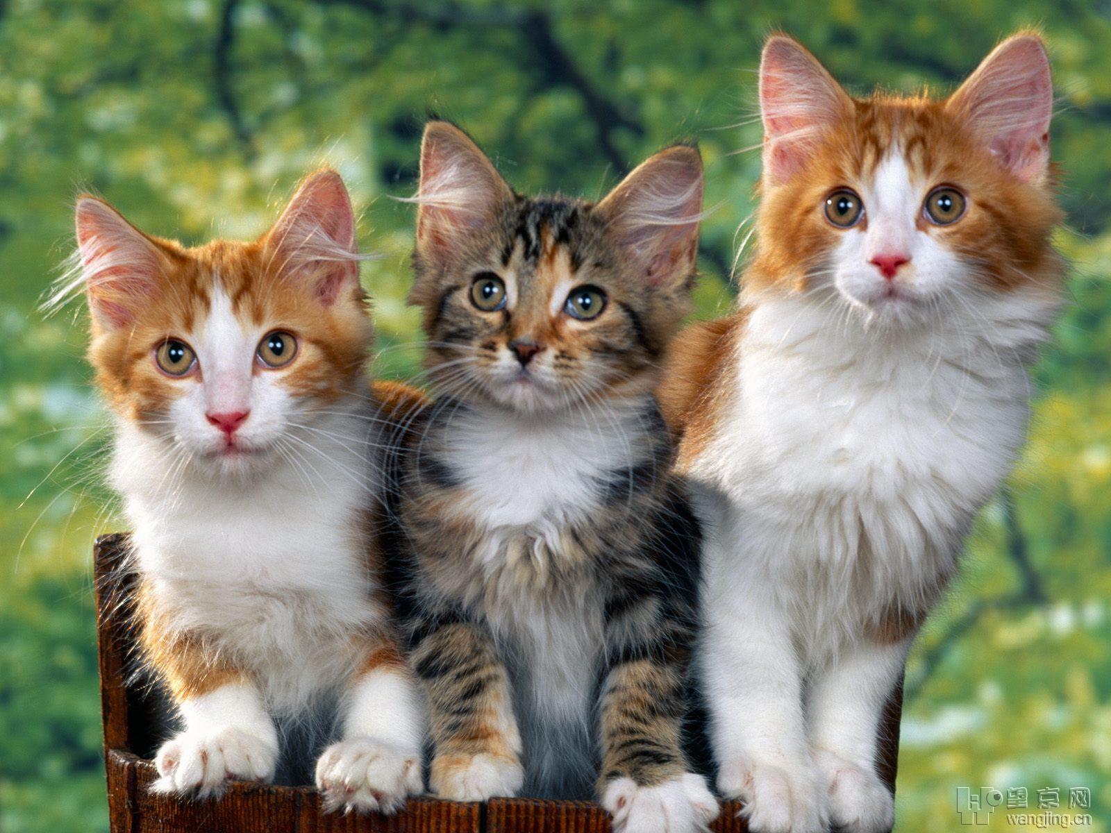 几张照片 可爱的猫咪