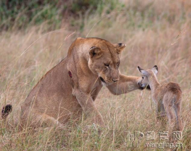 动物之间令人感动的温馨场面